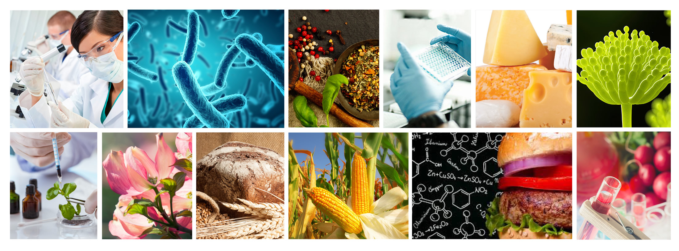 a grouping of photos of different industries of microbial enzyme production fields